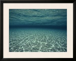 Underwater View by Bill Curtsinger