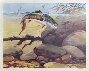 Rainbow Trout by Bill Elliot