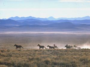 Band of Wild Horses Taking Flight Across Western Sage by Bill Eppridge