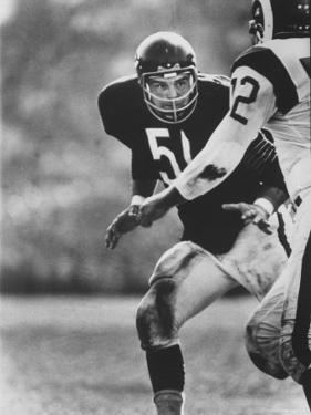 Linebacker for the Bears Dick Butkus by Bill Eppridge