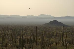 A Border Patrol Helicopter Looking for Illegal Activity in Organ Pipe Cactus National Monument by Bill Hatcher