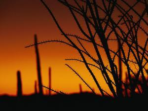 A Flaming Orange Sky Silhouettes Ocotillo and Saguaro Cacti by Bill Hatcher