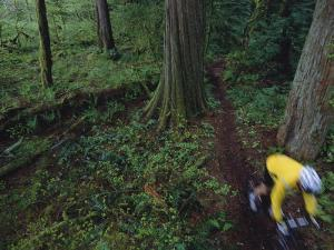 Biker Riding Through Forest by Bill Hatcher