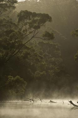 Morning View of the Karri Forest in the Mist and Fog Along the Warren River by Bill Hatcher
