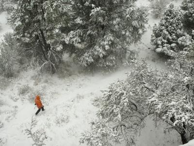 Snow in an Early Winter Storm Covers Trees Along a Trail by Bill Hatcher
