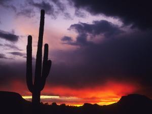 Storm Clouds Pass over a Saguaro Catus near Phoenix, Arizona by Bill Hatcher