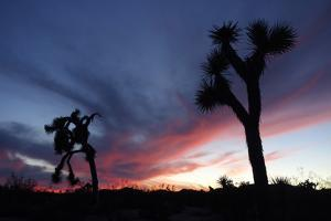 Sunset in Joshua Tree National Park, California by Bill Hatcher