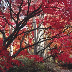 Autumnal Colours I by Bill Philip