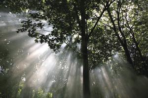 Crescendo of Light by Bill Philip