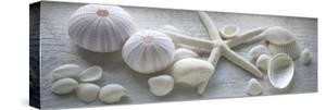 Driftwood Shells I by Bill Philip