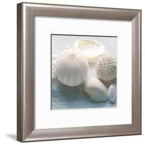 Driftwood Shells IV by Bill Philip