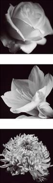 Flower Panel I by Bill Philip