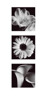 Flower Panel II by Bill Philip