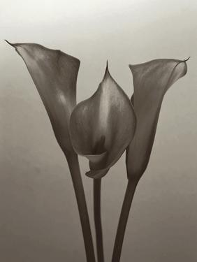 Lily II by Bill Philip