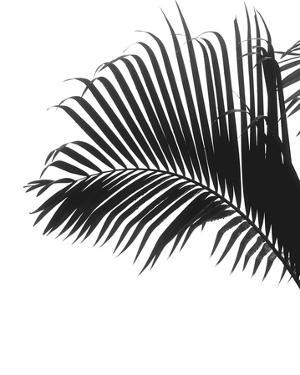 Linear Palm I by Bill Philip