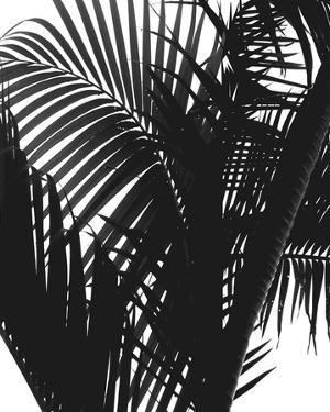 Linear Palm II by Bill Philip