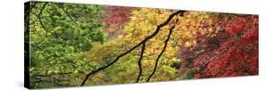 Maple Glade IX by Bill Philip