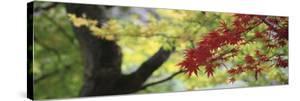 Maple Glade VII by Bill Philip