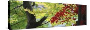Maple Glade VIII by Bill Philip