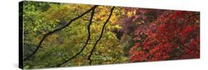 Maple Glade X by Bill Philip