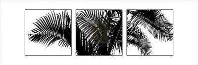 Palm Frond Triptych III