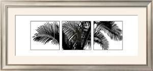 Palm Frond Triptych III by Bill Philip