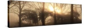 Rising Sun by Bill Philip