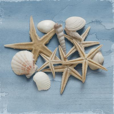 Shell Collection III by Bill Philip