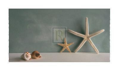 Starfish III by Bill Philip