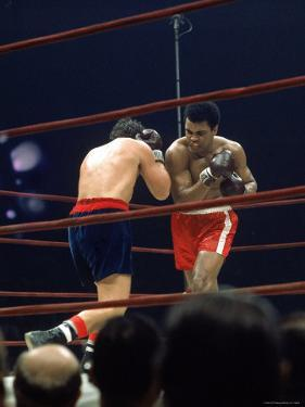 Boxers Cassius Clay and Oscar Bonavena Fighting at Madison Square Garden by Bill Ray