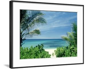 Beach and Palm Trees, Oahu, HI by Bill Romerhaus
