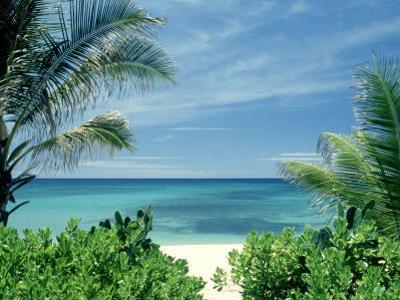 Beach and Palm Trees, Oahu, HI