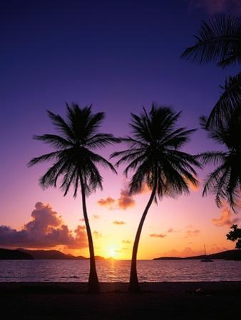 Twin Palms at Sunset by Bill Ross