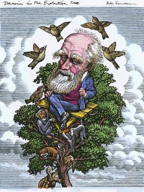 Charles Darwin In His Evolutionary Tree by Bill Sanderson