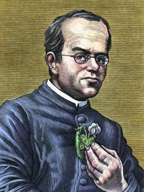 Gregor Mendel, Austrian Botanist by Bill Sanderson