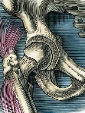Hip Joint, Artwork by Bill Sanderson
