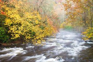 Mountain Stream with Mist and Fall Foliage by Bill Swindaman