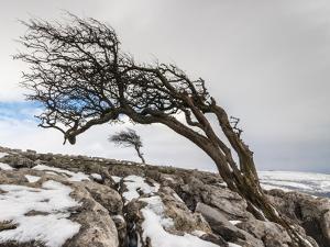 Twistleton Scar End in Snow, Ingleton, Yorkshire Dales, Yorkshire, England, United Kingdom, Europe by Bill Ward