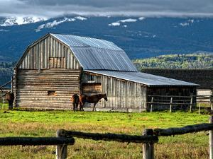 Horse and Barn on Mormon Row, Grand Teton National Park, Wyoming, Usa, May 2008 by Bill Wight