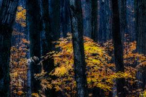Canada, Ontario. Autumn Abstract of Forest by Bill Young
