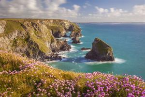 Pink Thrift Flowers, Bedruthan Steps, Newquay, Cornwall, England, United Kingdom by Billy Stock