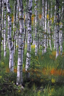 Birch Trees in Field
