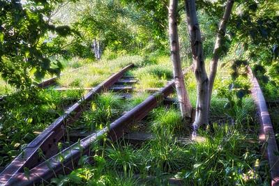 https://imgc.allpostersimages.com/img/posters/birch-trees-of-high-line-park-new-york-city_u-L-Q1ASEMG0.jpg?p=0