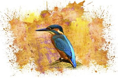 https://imgc.allpostersimages.com/img/posters/bird-collection-2_u-L-Q1HVVSZ0.jpg?artPerspective=n