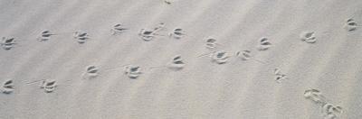 Bird Footprints on the Sand, Australia