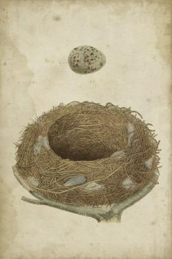 Bird's Nest Study I