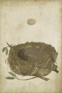 Bird's Nest Study II