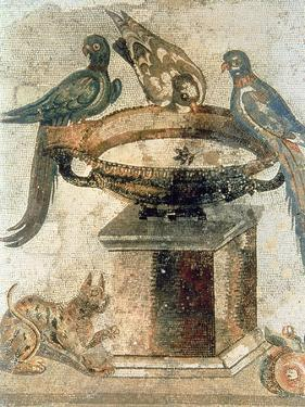 Birds and an Ambushing Cat, from Pompeii, 1st Century Ad
