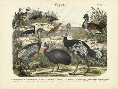 Birds, C.1860