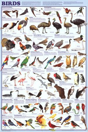 Birds Educational Science Chart Poster